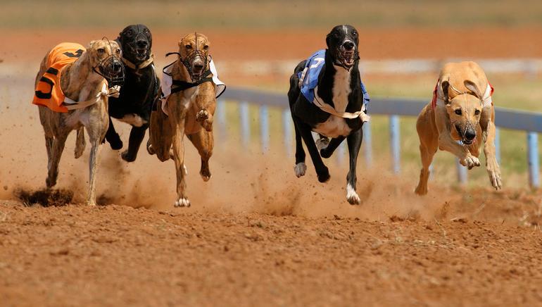 Las apuestas de carreras de galgos llegan a Luckia Sportsbook